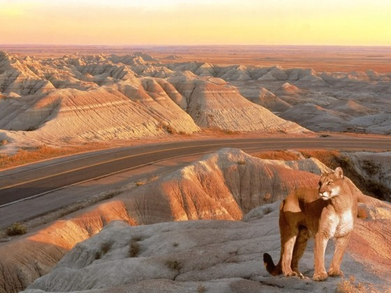 The Mighty Mountain Lion, Badlands